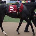 写真: ウインブライト(2回中山2日 11R 第92回 中山記念(GII)出走馬)