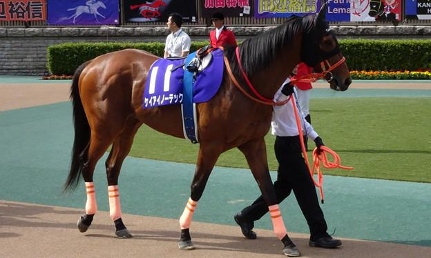 Photos: ケイアイノーテック(2回東京6日 11R 第22回 NHKマイルカップ(GI)出走馬)