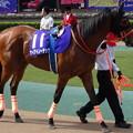 写真: ケイアイノーテック(2回東京6日 11R 第22回 NHKマイルカップ(GI)出走馬)