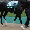 写真: サトノアーサー(3回東京4日 11R 第35回 エプソムカップ(GIII)出走馬)