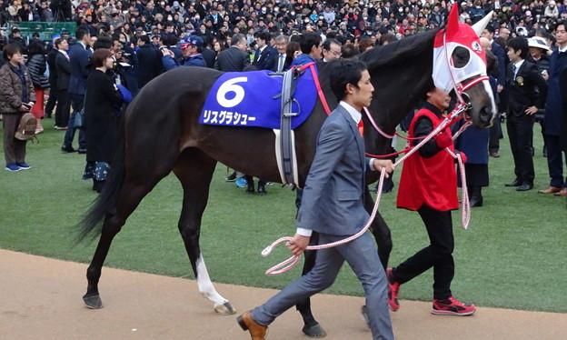 Photos: リスグラシュー(5回中山8日 11R 第64回グランプリ 有馬記念(GI)出走馬)