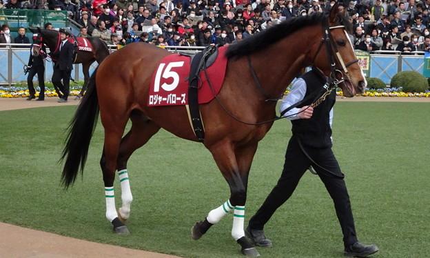 Photos: ロジャーバローズ(2回中山8日 11R 第68回 フジテレビ賞スプリングステークス(GII)出走馬)