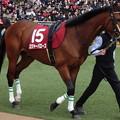 ロジャーバローズ(2回中山8日 11R 第68回 フジテレビ賞スプリングステークス(GII)出走馬)