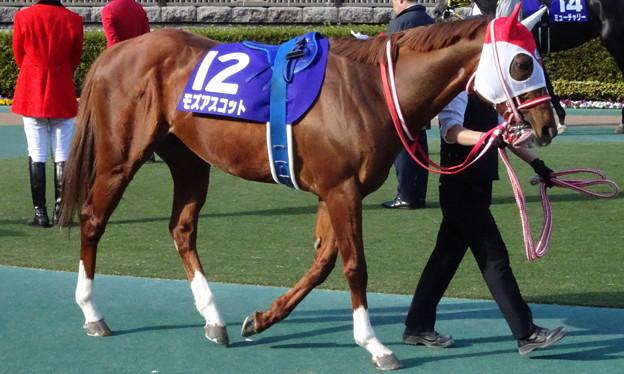 モズアスコット(1回東京8日 11R 第37回 フェブラリーステークス(GI)出走馬)
