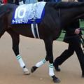 Photos: サートゥルナーリア(5回中山8日 11R 第64回グランプリ 有馬記念(GI)出走馬)