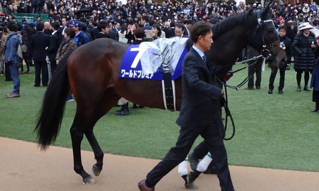 ワールドプレミア(5回中山8日 11R 第64回グランプリ 有馬記念(GI)出走馬)