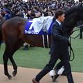 Photos: ワールドプレミア(5回中山8日 11R 第64回グランプリ 有馬記念(GI)出走馬)