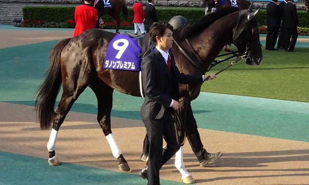 ダノンプレミアム(4回東京9日 11R 天皇陛下御即位慶祝 第160回 天皇賞(秋)(GI)出走馬)