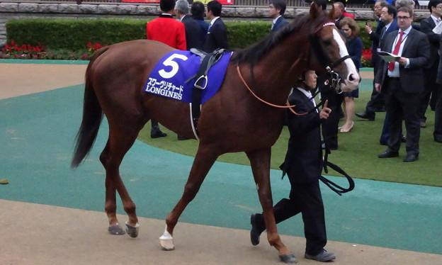 Photos: スワーヴリチャード(5回東京8日 11R 第39回 ジャパンカップ(GI)出走馬)