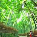 写真: 嵐山 - 竹トレイル