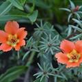 庭の花・3