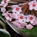 観葉植物に花が~