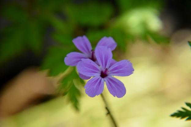 庭の草花~