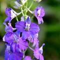 Photos: 庭に咲く花~