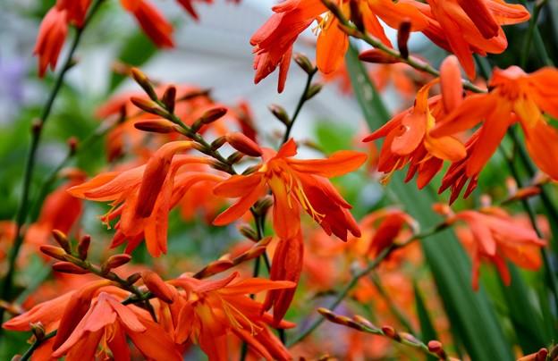 庭で増えてる花です~