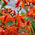 Photos: 庭で増えてる花です~