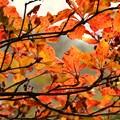 Photos: 11月の那須高原で~