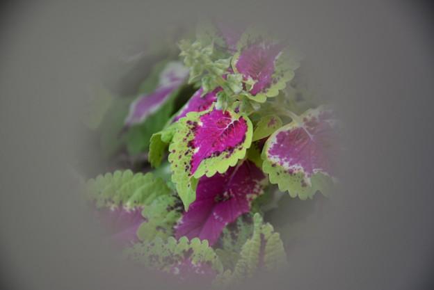 観葉植物~