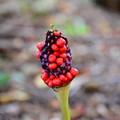 Photos: 高原で見た植物~