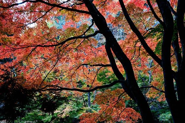 過ぎし日の紅葉~