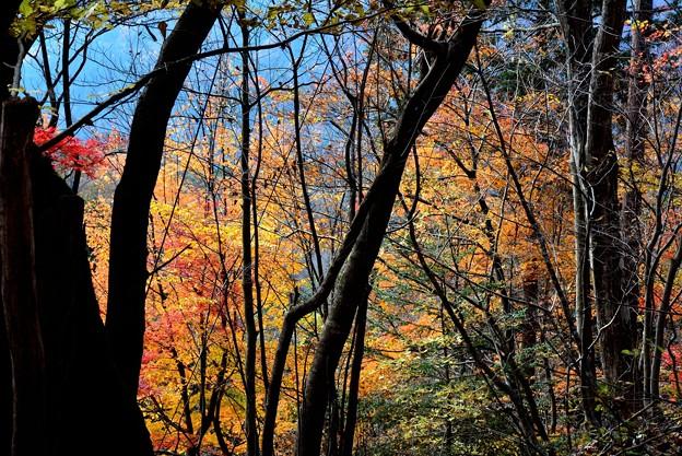 林間の紅葉~