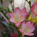 Photos: 園芸店の花~