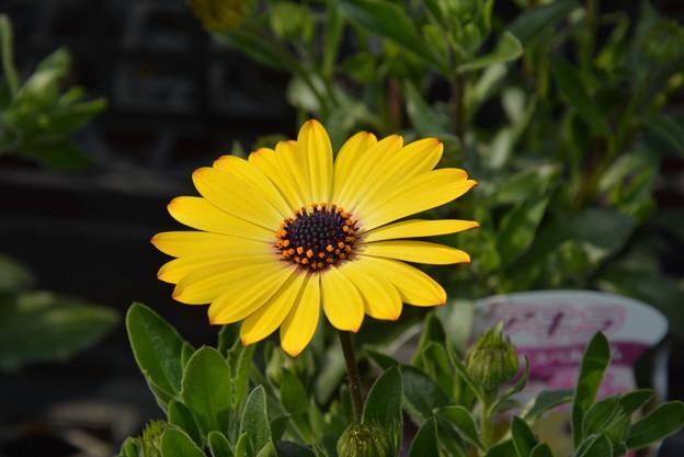 Photos: こんな花が庭に欲しいです~