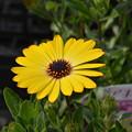 こんな花が庭に欲しいです~