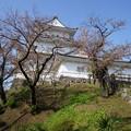 写真: 小田原城