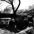 写真: 小田原城  こども遊園地