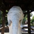 Photos: ヤマノススメ  聖地巡礼  観音寺  白像