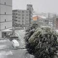 Photos: 遅めの雪(*´・ω・`)bよ