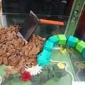 Photos: はめふら おもちゃヘビ カタリナのくわ