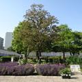 2014.5.10上坂部西公園