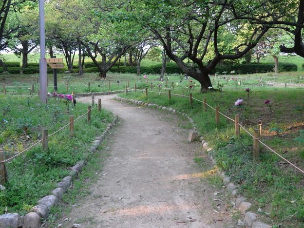 2018.4.27 尼崎農業公園
