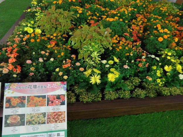 2019.9.30 Flower Art Museum 2019