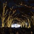Photos: 2019.12.14 大阪 光の饗宴 2019