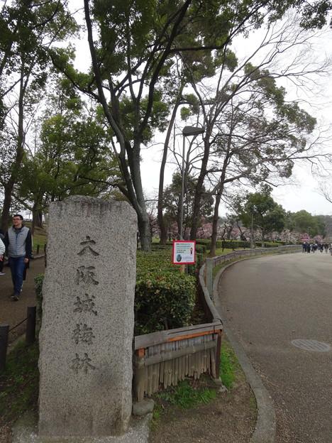 2020.2.15 大阪城梅林