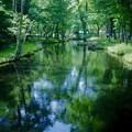 写真: 日光の水