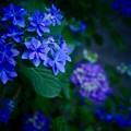 写真: 青モード