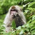 写真: 言わ猿