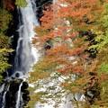 Photos: 霧降滝