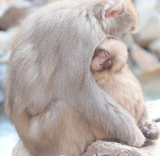 Photos: ただ、抱きしめる・・