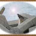 写真: 海岸のテトラポッド