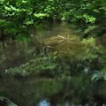 写真: 鏡池