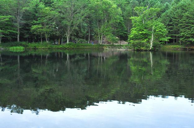 森の中の池の風景