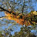 紅葉に包まれた樹木