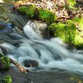 苔と川の流れ