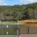 金太郎の池の風景