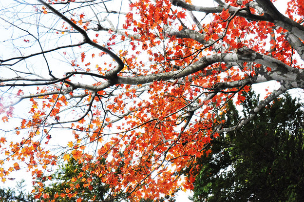 紅葉の足跡